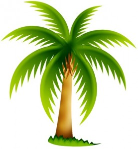 palm-tree-icon