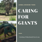 Caring for Giants: Elephants Up Close!