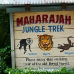 The Maharajah Jungle Trek