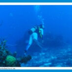 Scuba Diving At Sandals Royal Caribbean Resort – Jamaica
